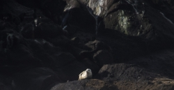 Yaquina Sea Lion